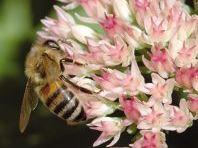 thumbnail-Nieuwe voorraad gratis bloemenzaad vanaf 15 april