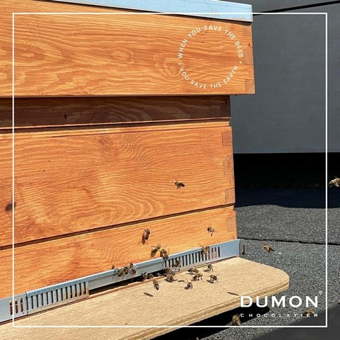 thumbnail-Dumon blijft vernieuwen(d)