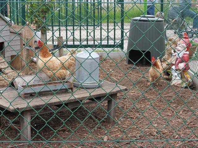 thumbnail-Toezichtszone na uitbraak vogelgriep reikt tot op Tielts grondgebied